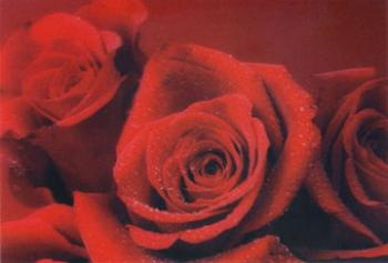 3D Sticker Postcard Red Roses
